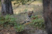 Tigercub_sitting.jpg