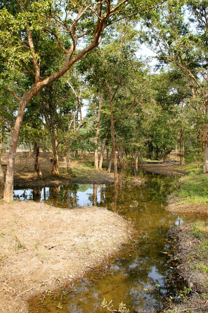Kanha Buffer Zone
