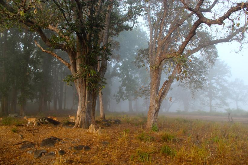 Kanha Scenery