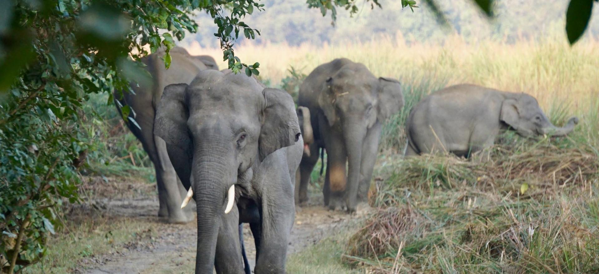 Elefanten_Dudhwa.jpg