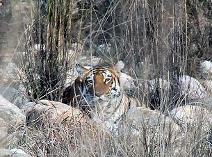 Tiger_Corbett.jpg