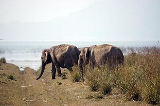 Elefanten_Corbett.jpg