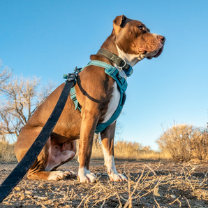 What Kind of Harness Is Best?