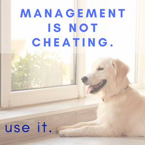 """When to Use """"Management"""" Instead of """"Training"""""""