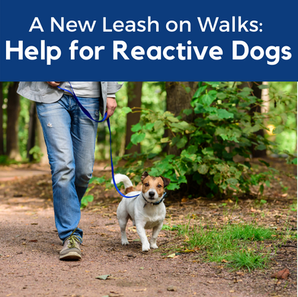 Help for Reactive Dogs: A New Leash on Walks