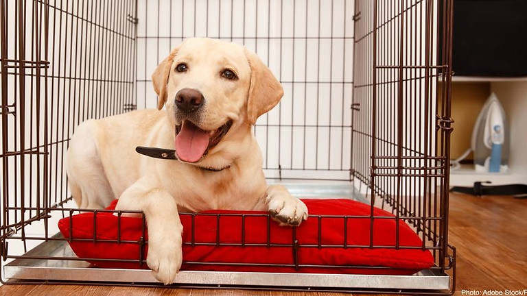 To Crate or Not To Crate?