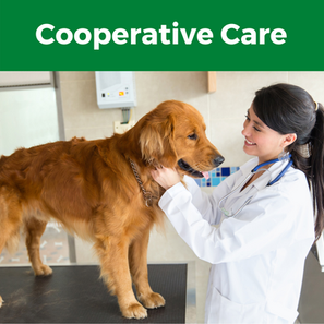 Introduction to Cooperative Care