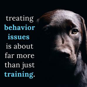 """Treating Behavior Issues Versus """"Training"""""""