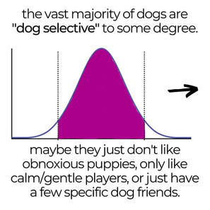 Dog Sociability is a Spectrum