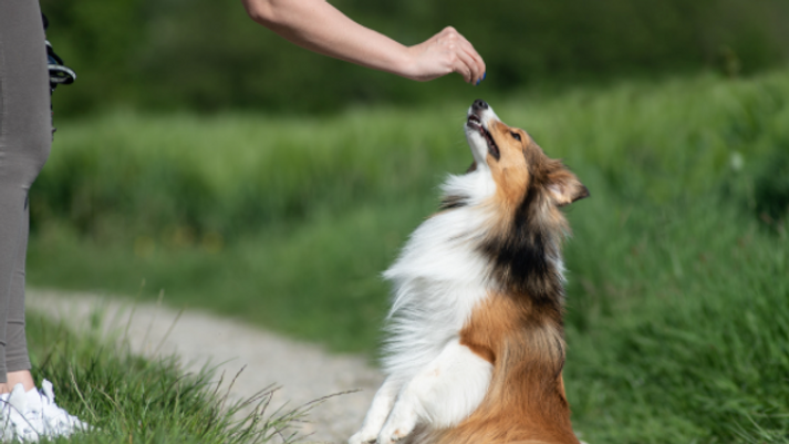 What to Do When Your Dog Won't Take Treats