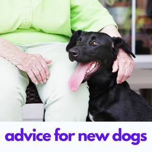 Advice for Your New Dog