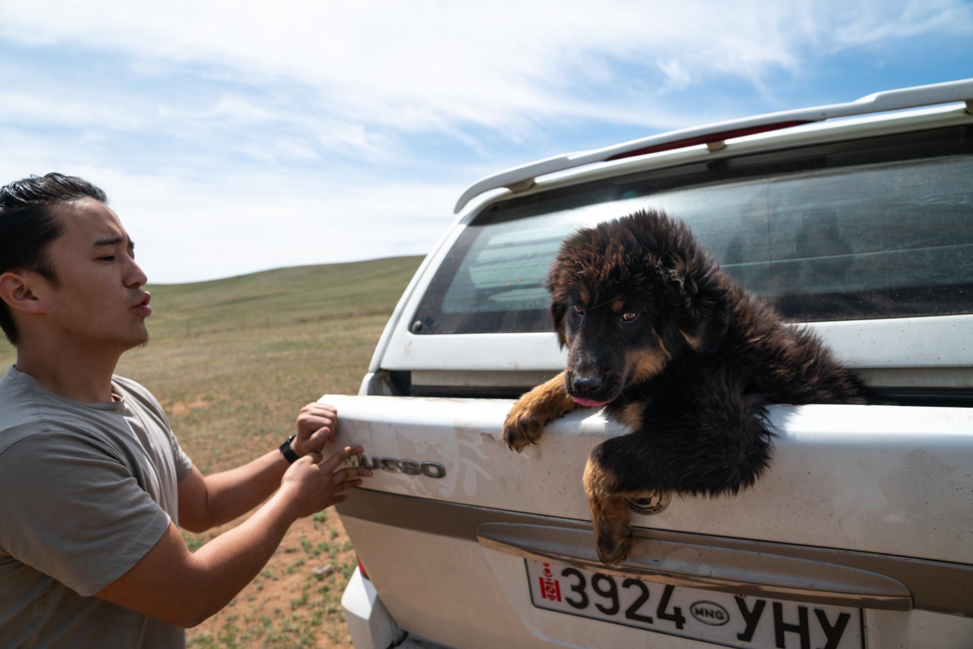 Des chiens à la rescousse des steppes de la Mongolie