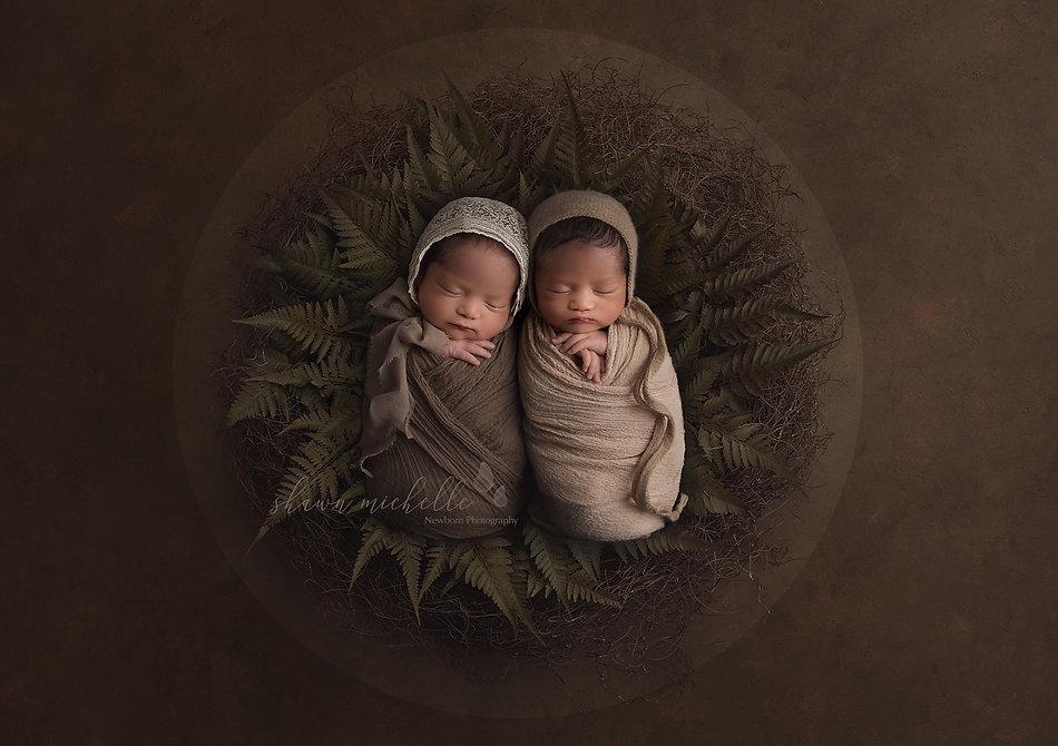 TwinsFernNestbrown copy_edited.jpg