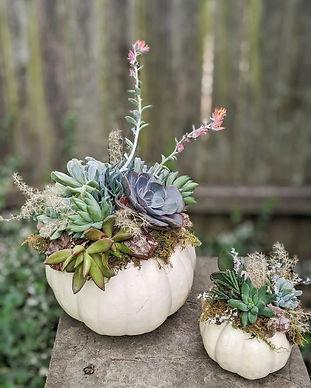 Succulent Pumpkin.jpeg