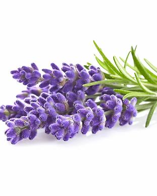 Lavender_plant_1200x960_c5a8afe8-38a9-46