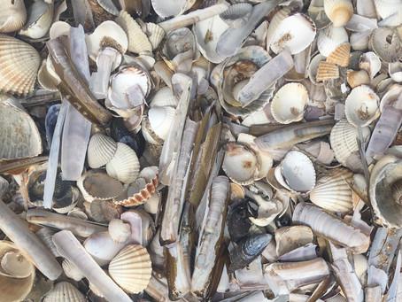 Coquilles et autres crustacés