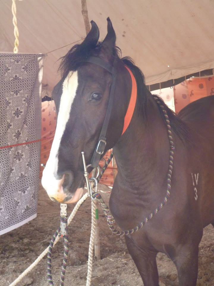 Happy with fulmer snaffle