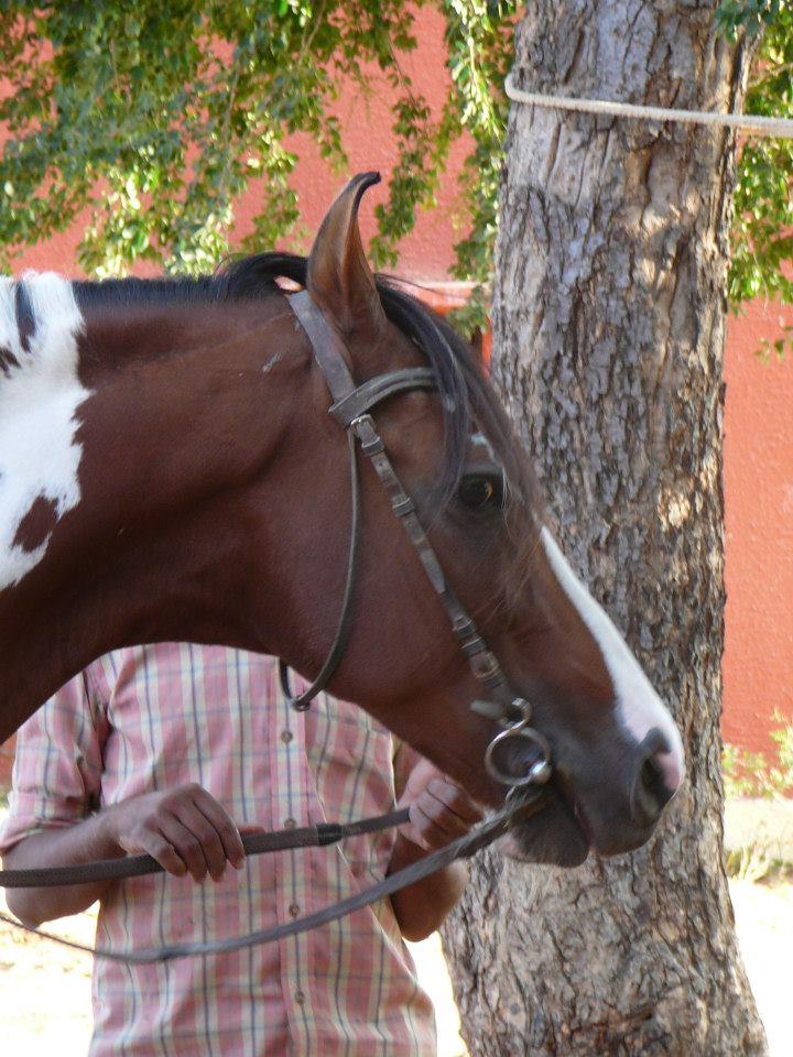 Happy stallion with smooth bit