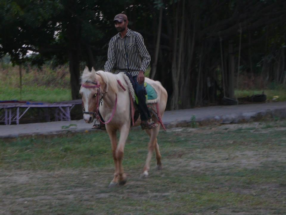 Rider balance ~ riding without reins
