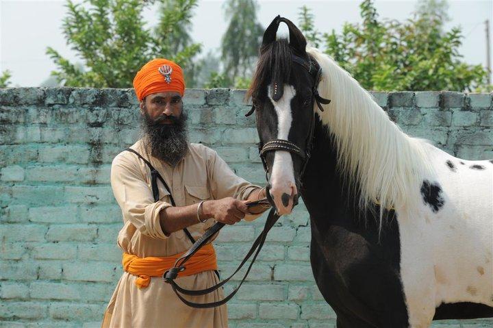 Nihang with Marwari. G Faulin