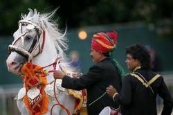 Kathiawari Stallion 'Suraj'