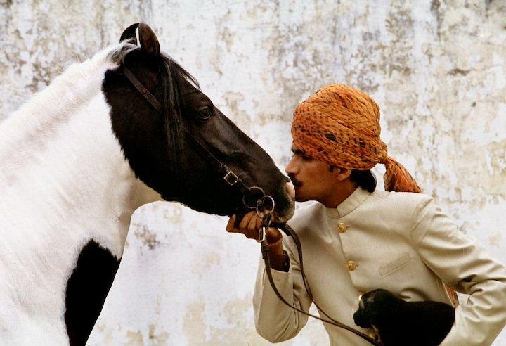 Kathiawari Stallion Tipu Sultan