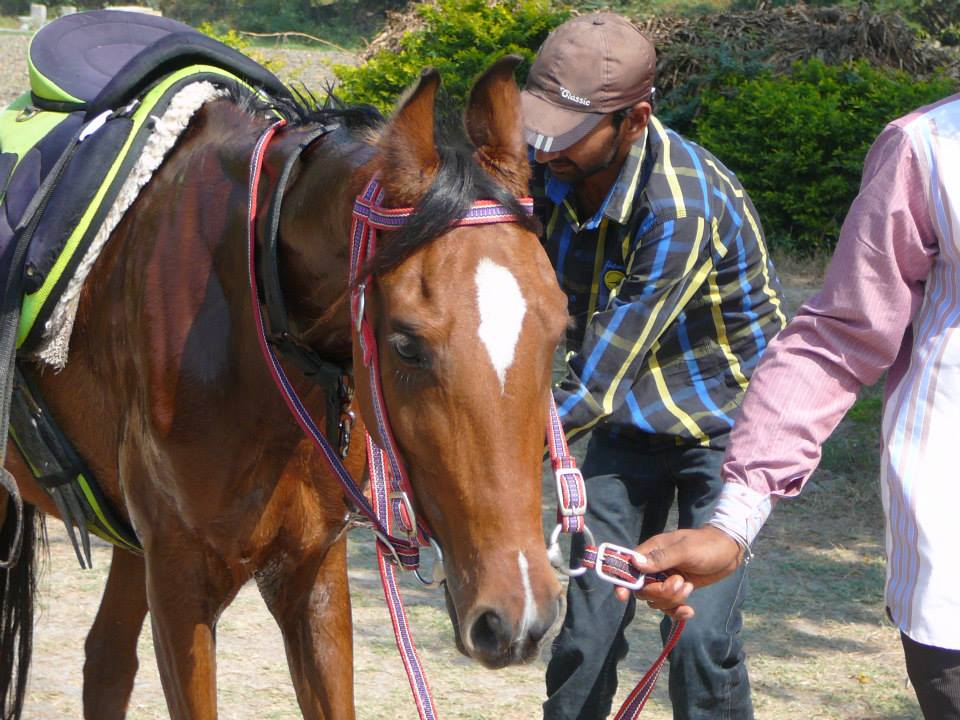 Unsaddling after the lap