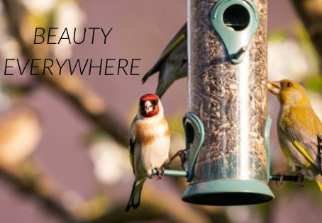 Beauty Everywhere