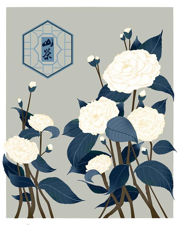 立冬-白山茶.jpg