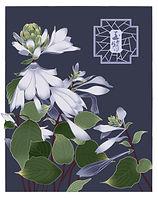 立秋-白玉簪.jpg