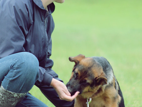 Dog training – a costly business?