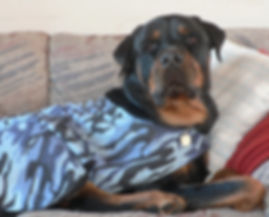 Judah on couch.jpg
