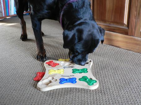 Providing Mental Stimulation for Your Dog