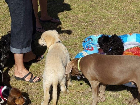 Doggy Daycare?