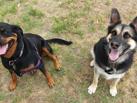 Finding the balance in Social Interactions between dogs