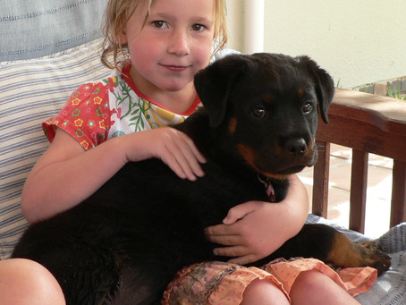 Children and Dogs: Where it all goes wrong...