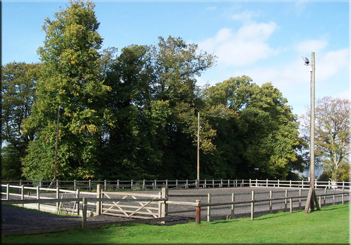 Equine Physio UK arena