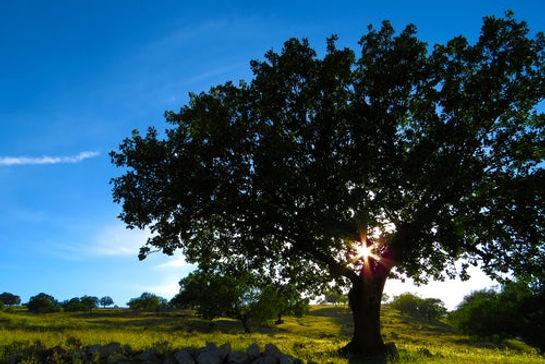photo d'un paysage avec le soleil en fond qui illumine un bel arbre sur l'avant de la photo