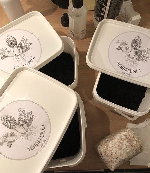 Thuiskweekpakket A (3,2 liter) grijze oesterzwammen