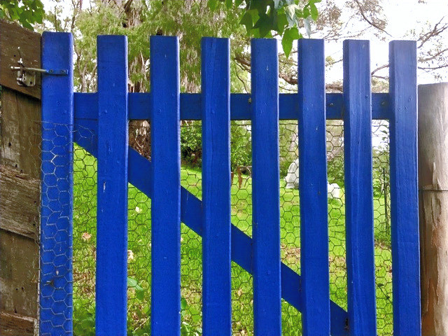 Close-up of blue wooden garden gate with greenery beyond.