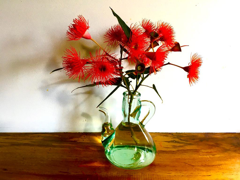 Vinegar bottle vase of red-flowering gum blooms on wooden coffee table