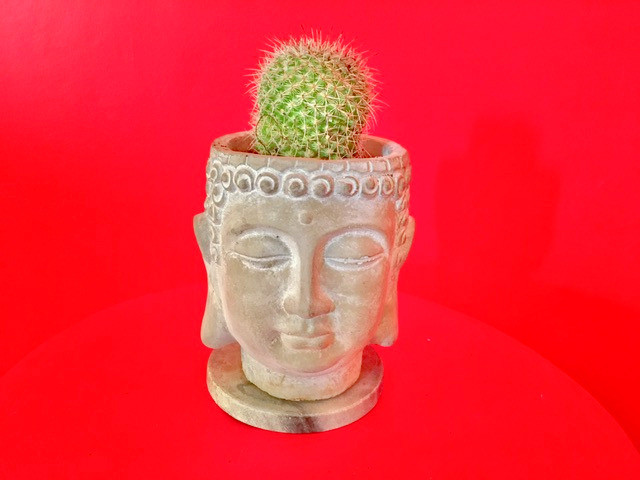 Red background. Pot shaped like face, eyes lowered, benign smile, containing a small hairy-headed cactus.