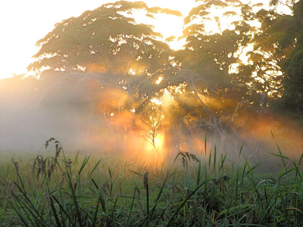 Sunrise viewed through towering trees.