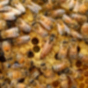 Big Buzz About Bees