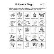 Pollinator Bingo