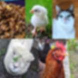 Critter Tour & Chick Update