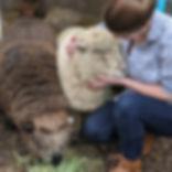 Open Farm Questions