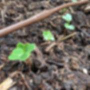 Seedling Update: Week 1