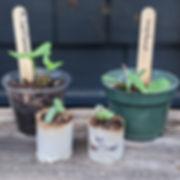 Seedling Update: Week 2