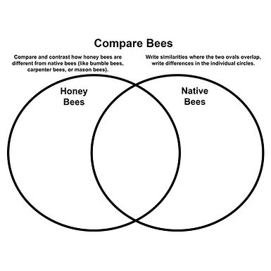 Compare Bees